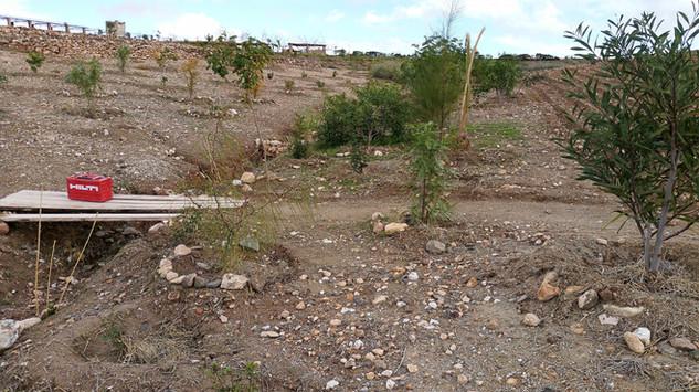 Plantation autour du talweg, 2 ans aprés...
