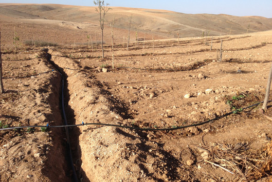 Installation irrigation...