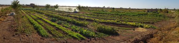Autonomie alimentaire, regeneration des sols