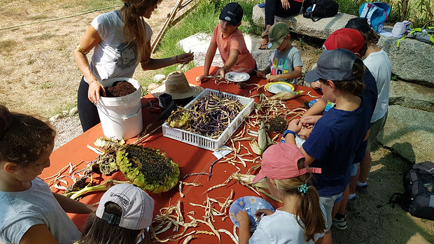 EDD labellisation E3D, education national, permaculture, education ecologie, developpement durable, formation aux enseignants, regeneration vegetale, fabien tournan, autonomie alimentaire, regeneration des sols