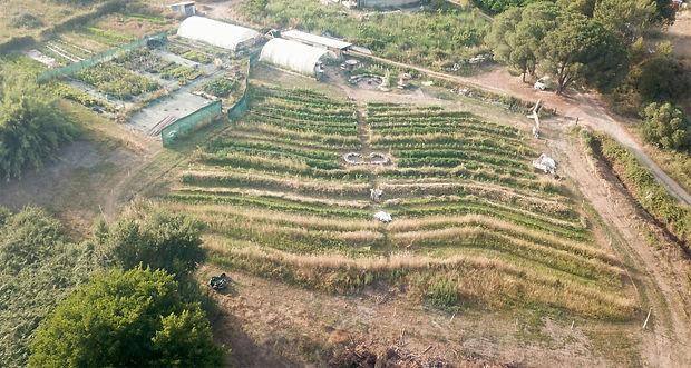 Listinecore regeneration vegetale fabien tournan, regeneration vegetale engrais vert, plante permaculture, autonomie alimentaire, regeneration des sols, permaculture design