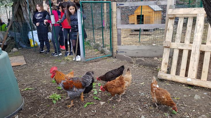 LMes poules, partenaire recyclage, intégration du soins au viavants et production d'oeufs...