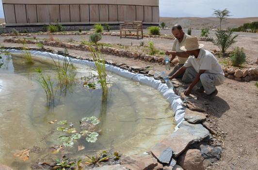 Installation des poissons ''Gambusia'' contre les larves de moustiques et l'equilibre du bassin...