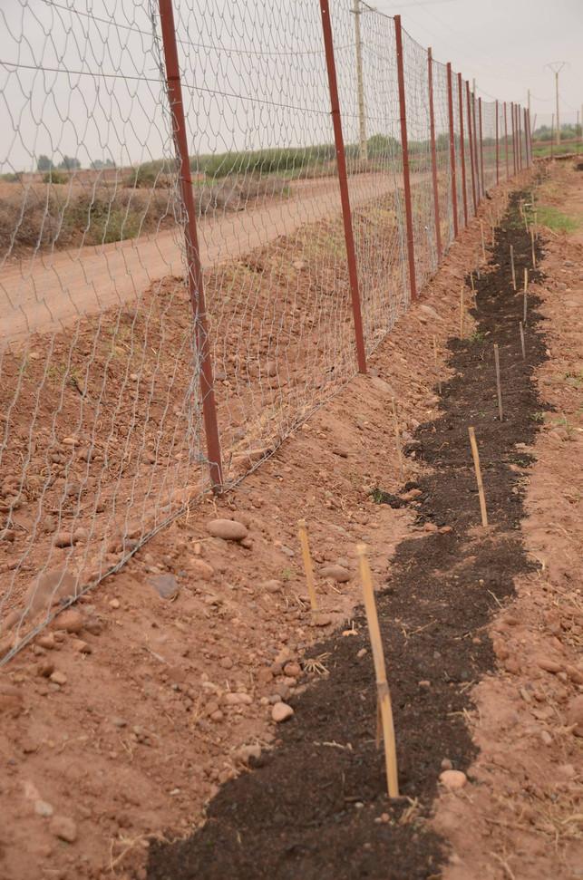Piquetage pour plantation des arbres de haie...