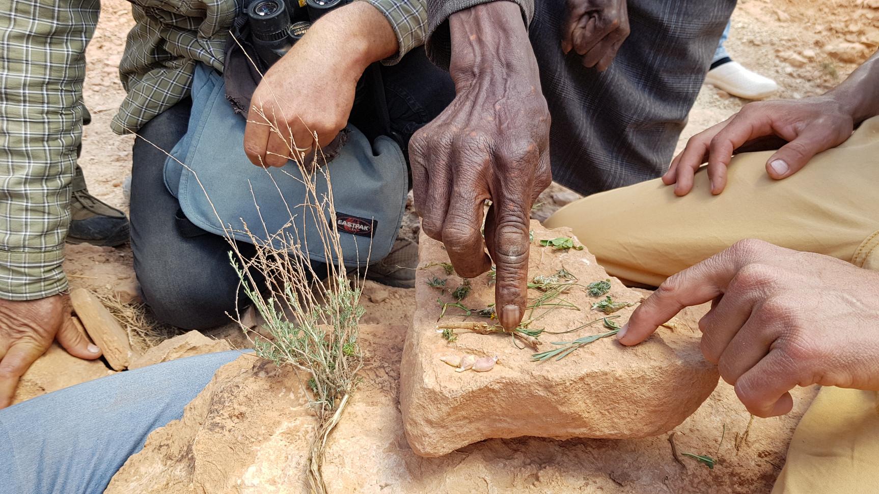 Les anciens donnent le nom des plantes en Berbère...