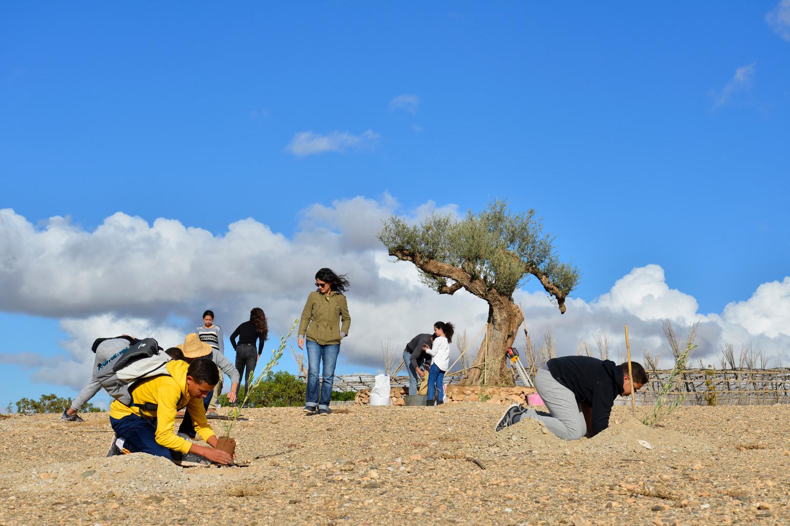 Chantier participatif, plantation des oliviers dans le Désert...