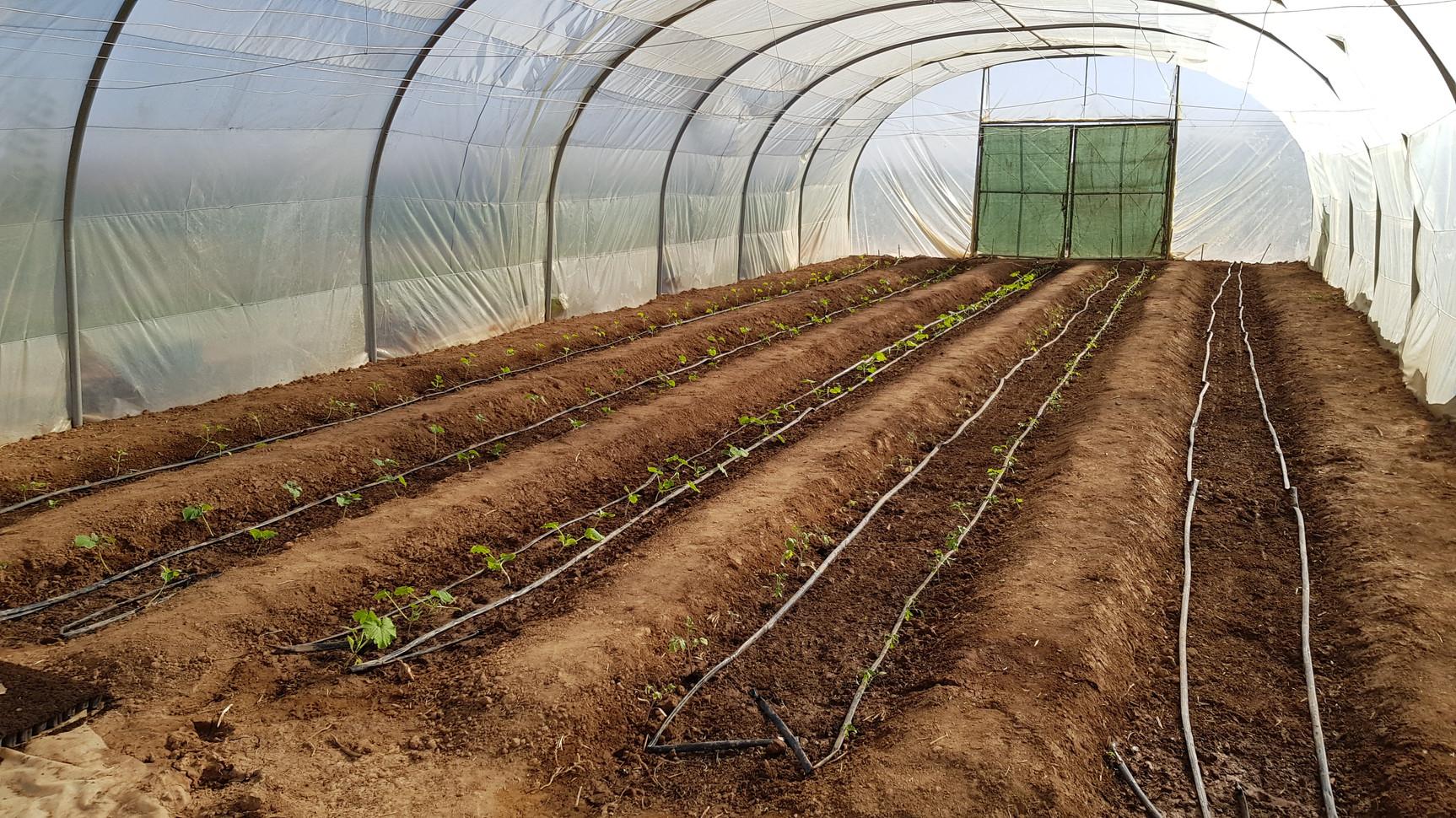 Lancement de la serre, lit décaissé, pour zone aride, gestion de l'eau plus adaptés. Les apports de matières organique viendra ratraper le chemin avec les années...