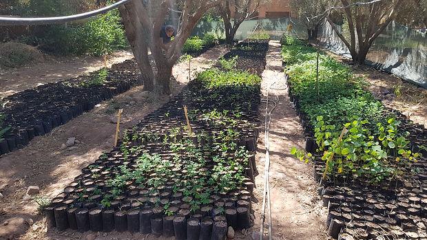 plante permaculture, autonomie alimentaire, regeneration des sols, permaculture design