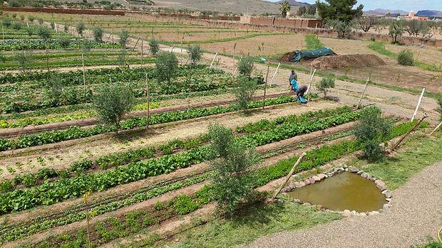 Ferme bio intensif, permaculture design,