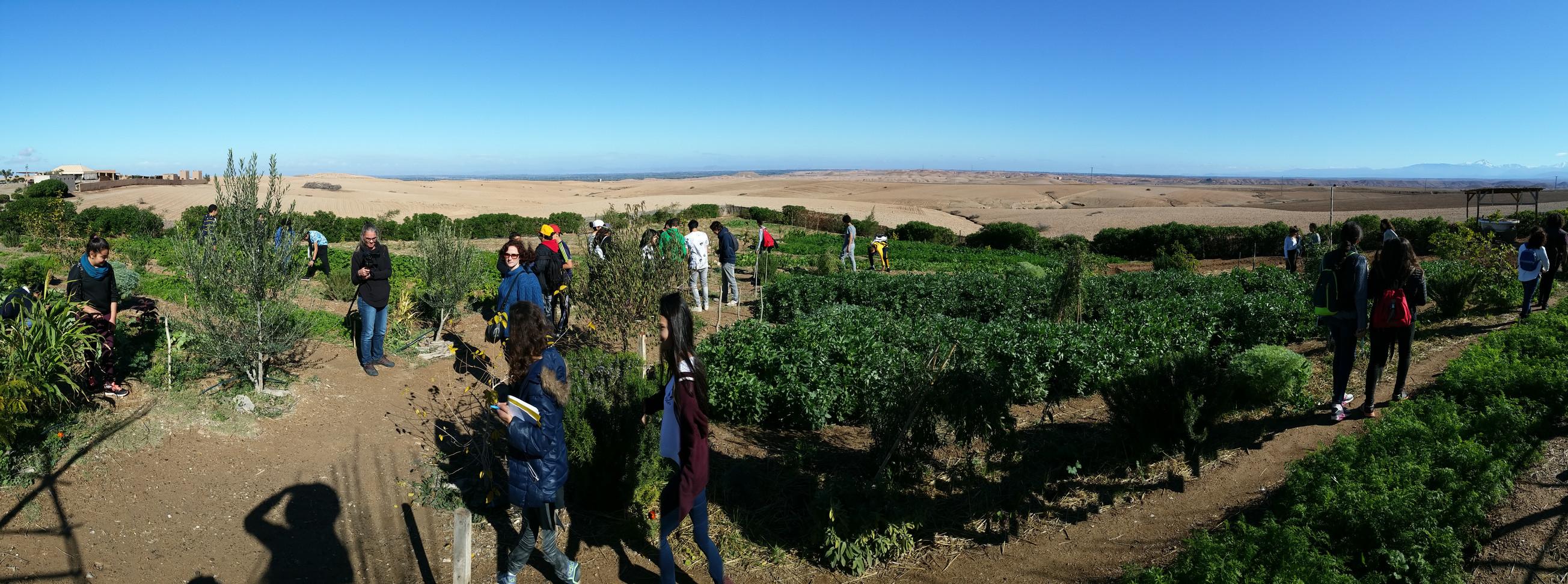 Visite du potager en plein désert...