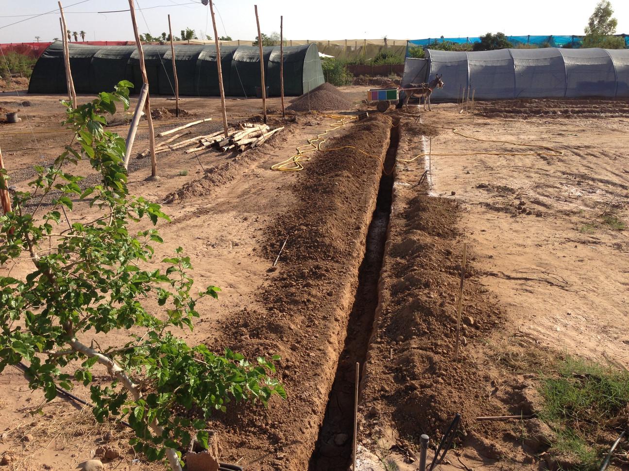 Lancement des tranchées pour les drains, avec une pente de 0,3%...