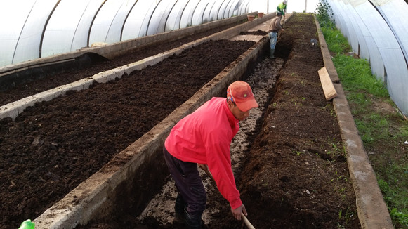 Lombriculture semi inductrielle sans machine termique, toute à la main...