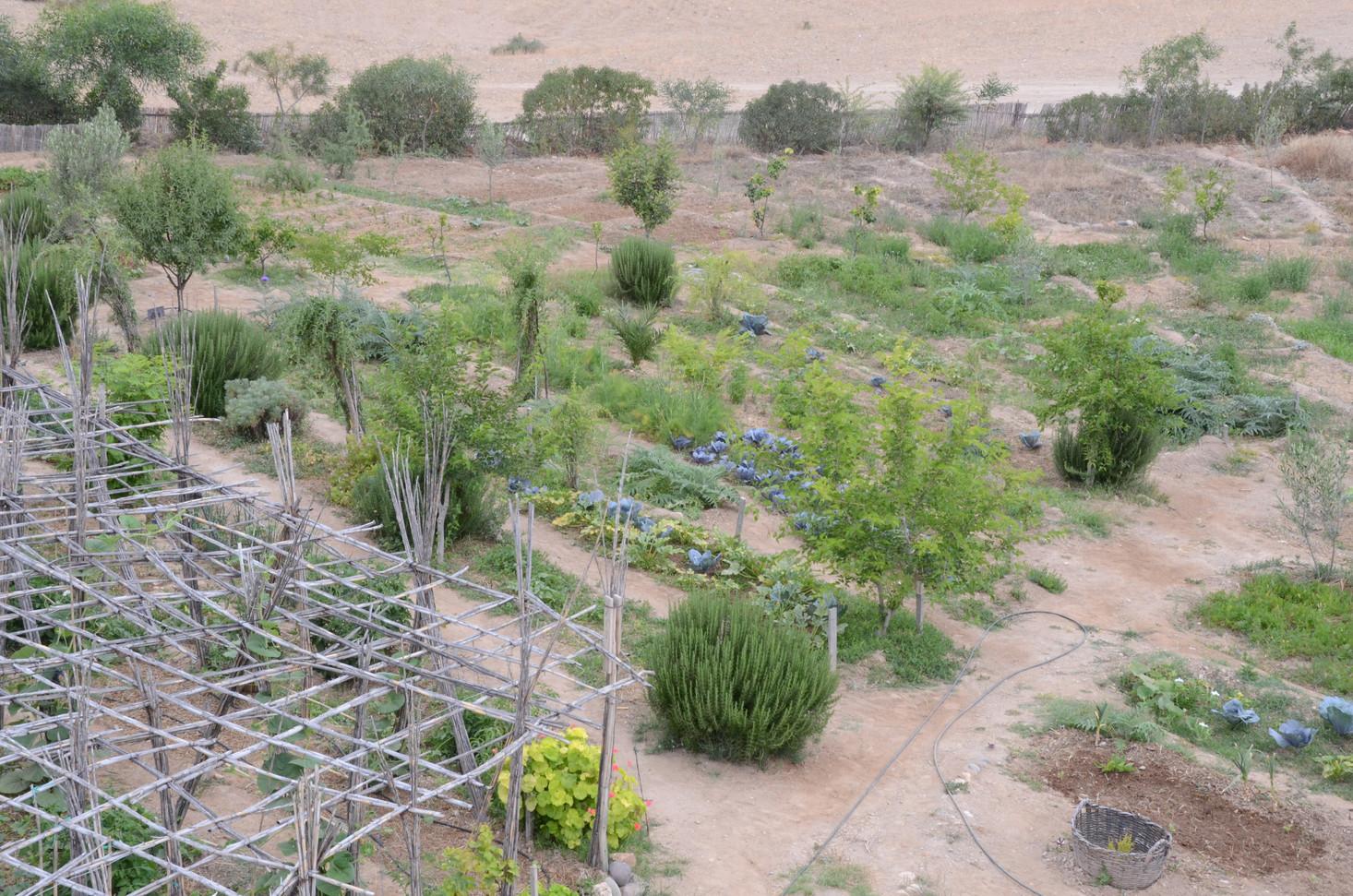 Agroforesterie, arbres sur les abords et au centre du potager...
