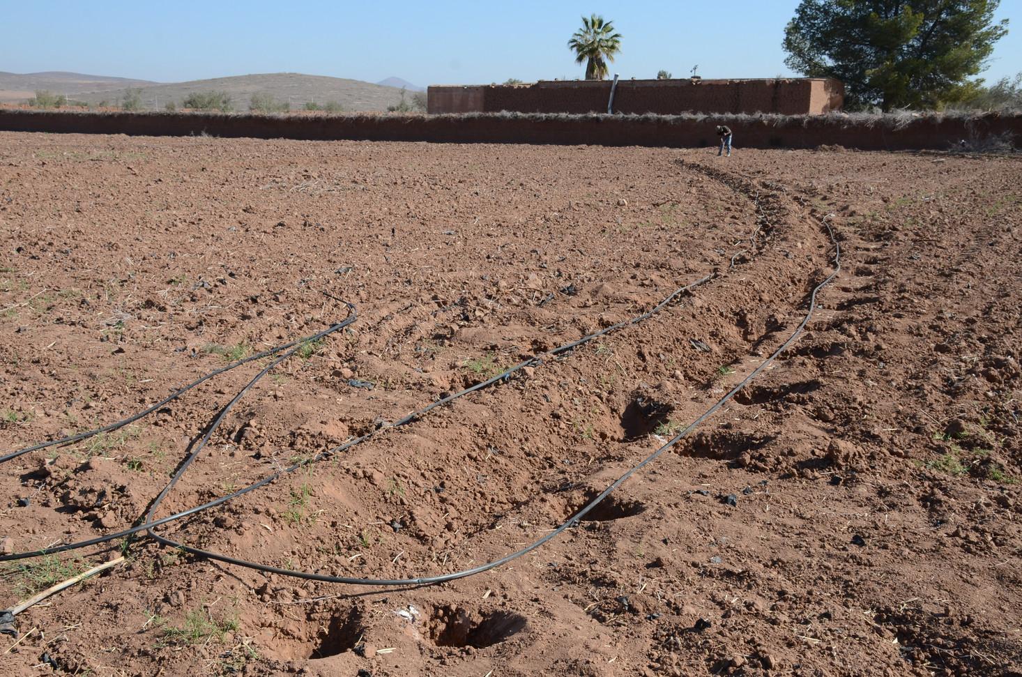 Installation des lignes d'arbres fruitiers sur niveau...