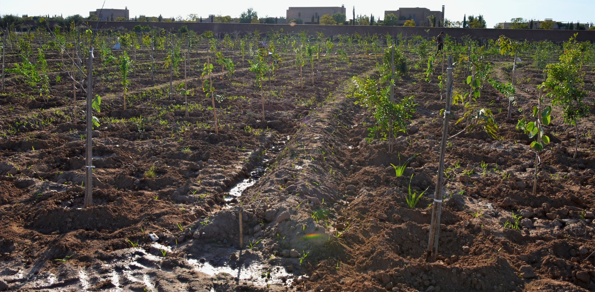 Plantation sur ligne de niveau...