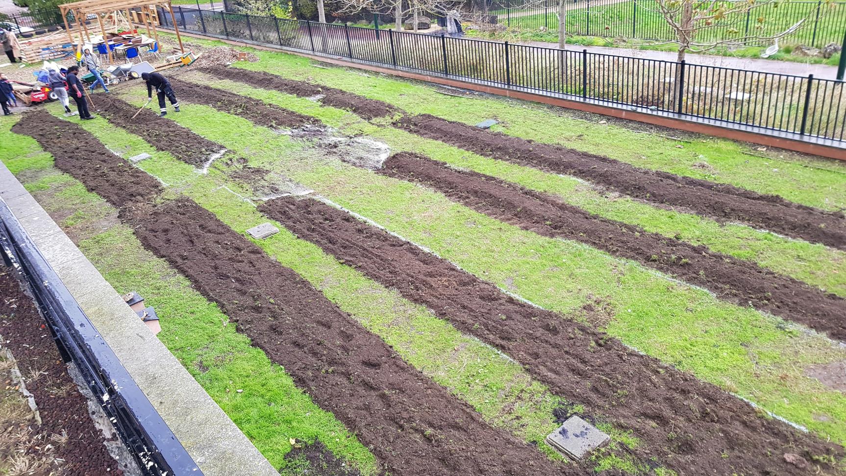mise en forme des butte de terre (billon)...