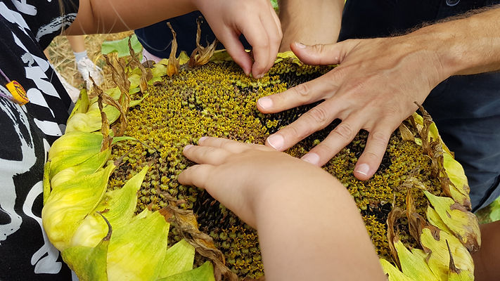 Yoga permaculture formation pour les enseignants aux E3D EDD, transition écologique, écocitoyenneté , Education permaculture dans les écoles, autonomie alimentaire fabien tournan, regeneration des sols, regeneration végétale, autonomie alimentaire