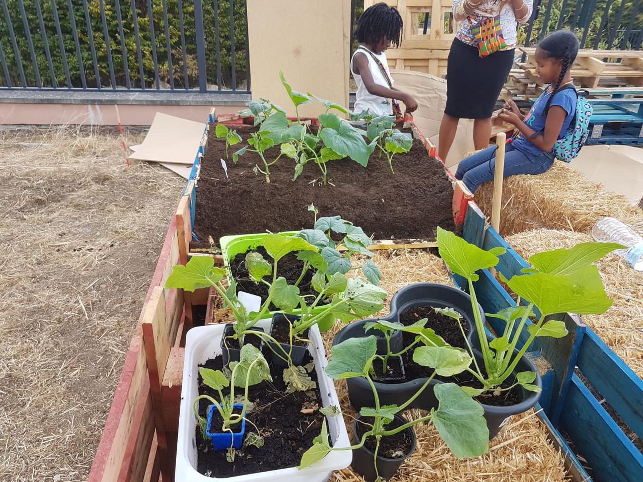 Jardin permaculture hors sol