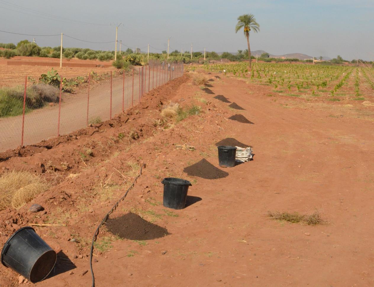 Lancement,des plantations....