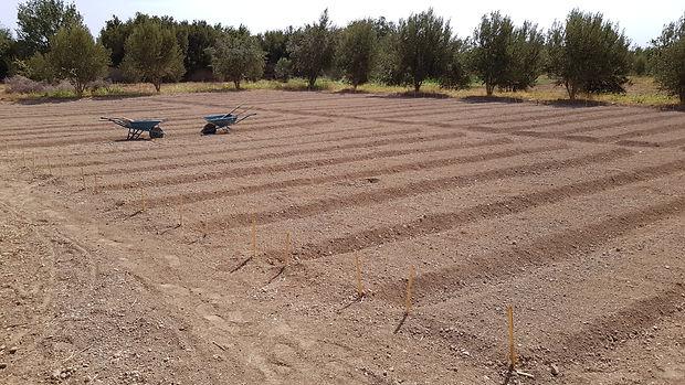 permaculture regeneration vegetale, regeneration vegetale engrais vert, plante permaculture, autonomie alimentaire, regeneration des sols, permaculture design