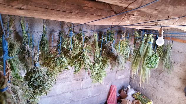 Séchage des herbes aromatiques...
