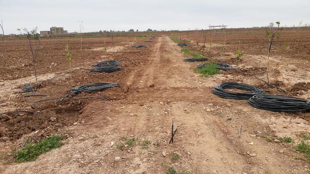 Irrigation, goutte à goutte...