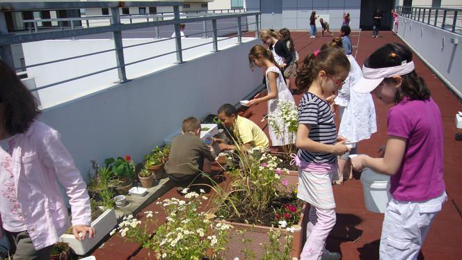 Atelier semi et mise en place d'une pépinière sur les terrasse de l'école!....