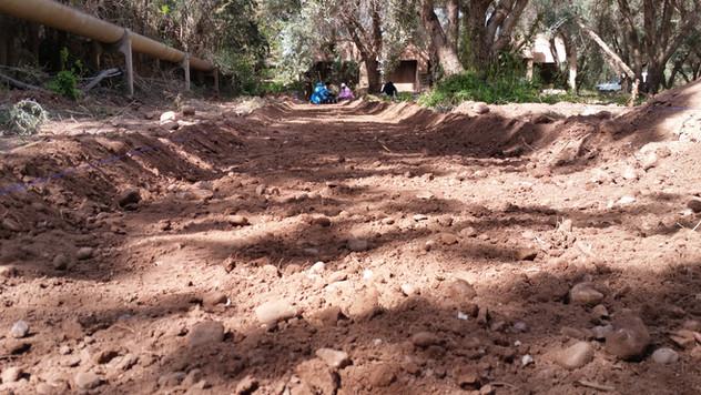 Préparer des espaces d'accueil légerment décaissés pour optimiser l'irrigation...