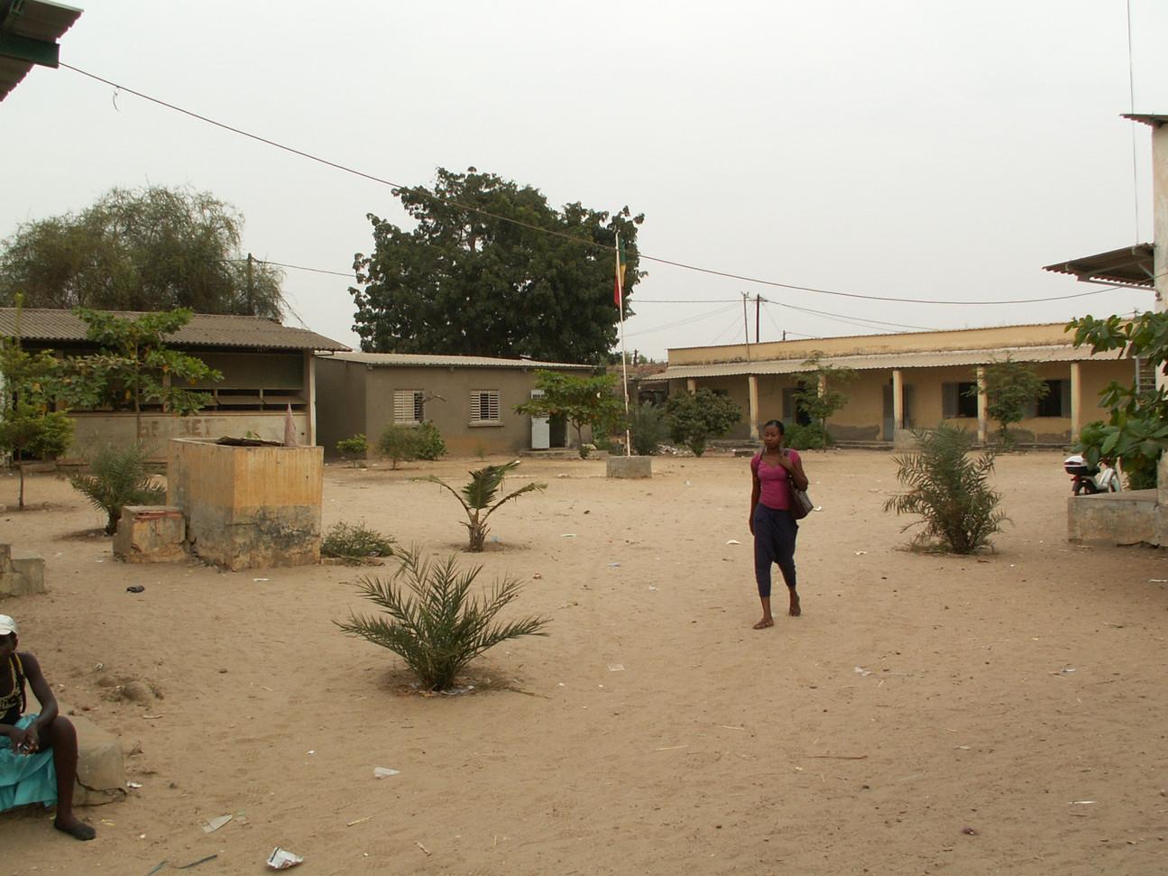 Plantation année 2 (Kaolak)