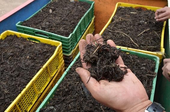 Lombriculture regeneration vegetale, regeneration vegetale engrais vert, plante permaculture, autonomie alimentaire, regeneration des sols, permaculture design