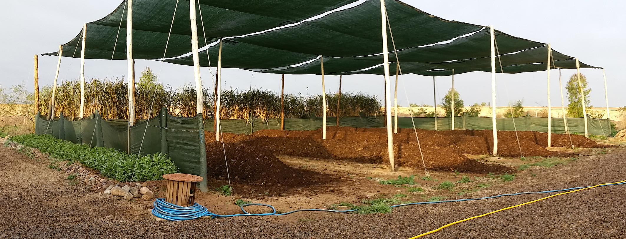 Zone de précompostage sous ombrière, avec phytoépuration par bambous....
