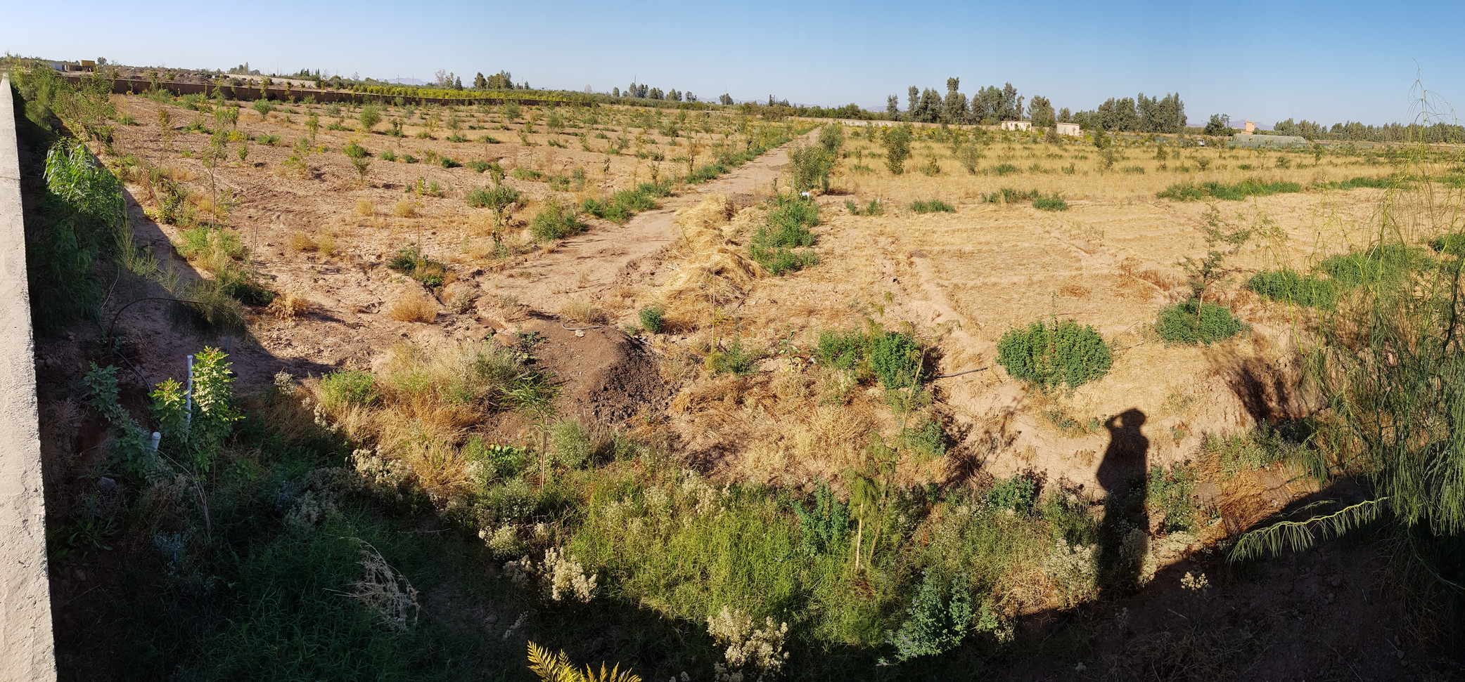 Aprés, système en fonction, période aride, les engrais vers sont sec sur pieds...