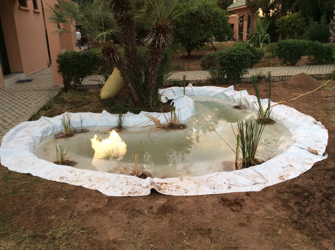 Installation des plantes aquatique...