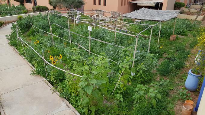 Jardin n°1 majorelle, en production...