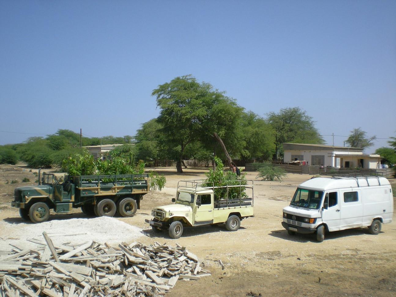 """Partenariat avec le """"Prytannée militaire de St Louis"""" pour transporter des arbres et les acheminer dans les écoles de la région!...."""