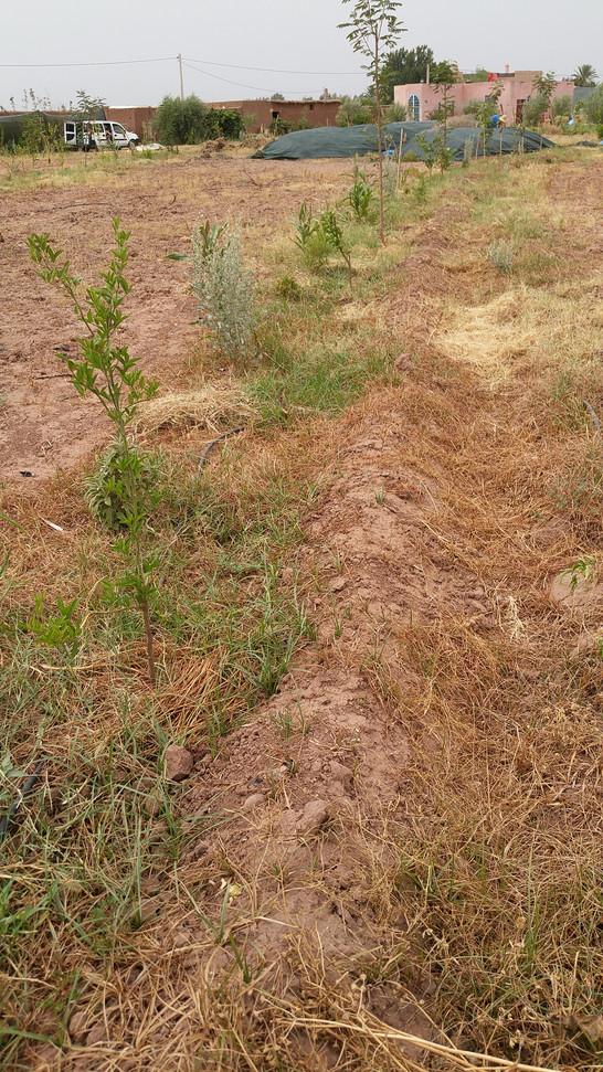 Agroforesterie...