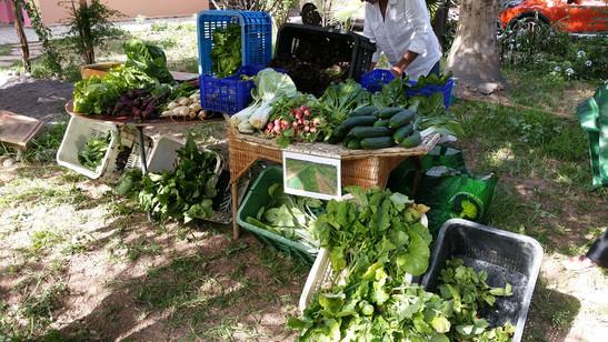 Participation aux marchés locaux...