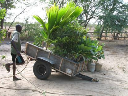 Préparation arbres pour Kaolac...