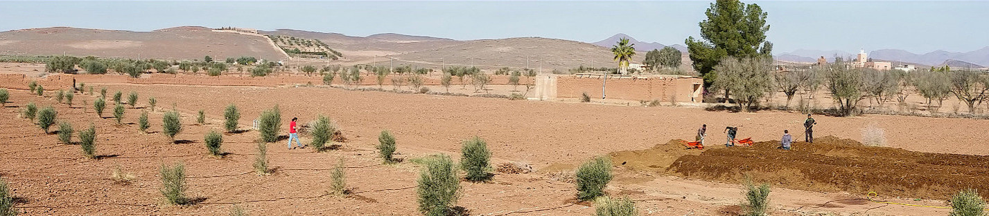 Terrain nu au dessus des oliviers...
