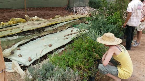 Zone de compostage des vers (Eisenia Foetida)...