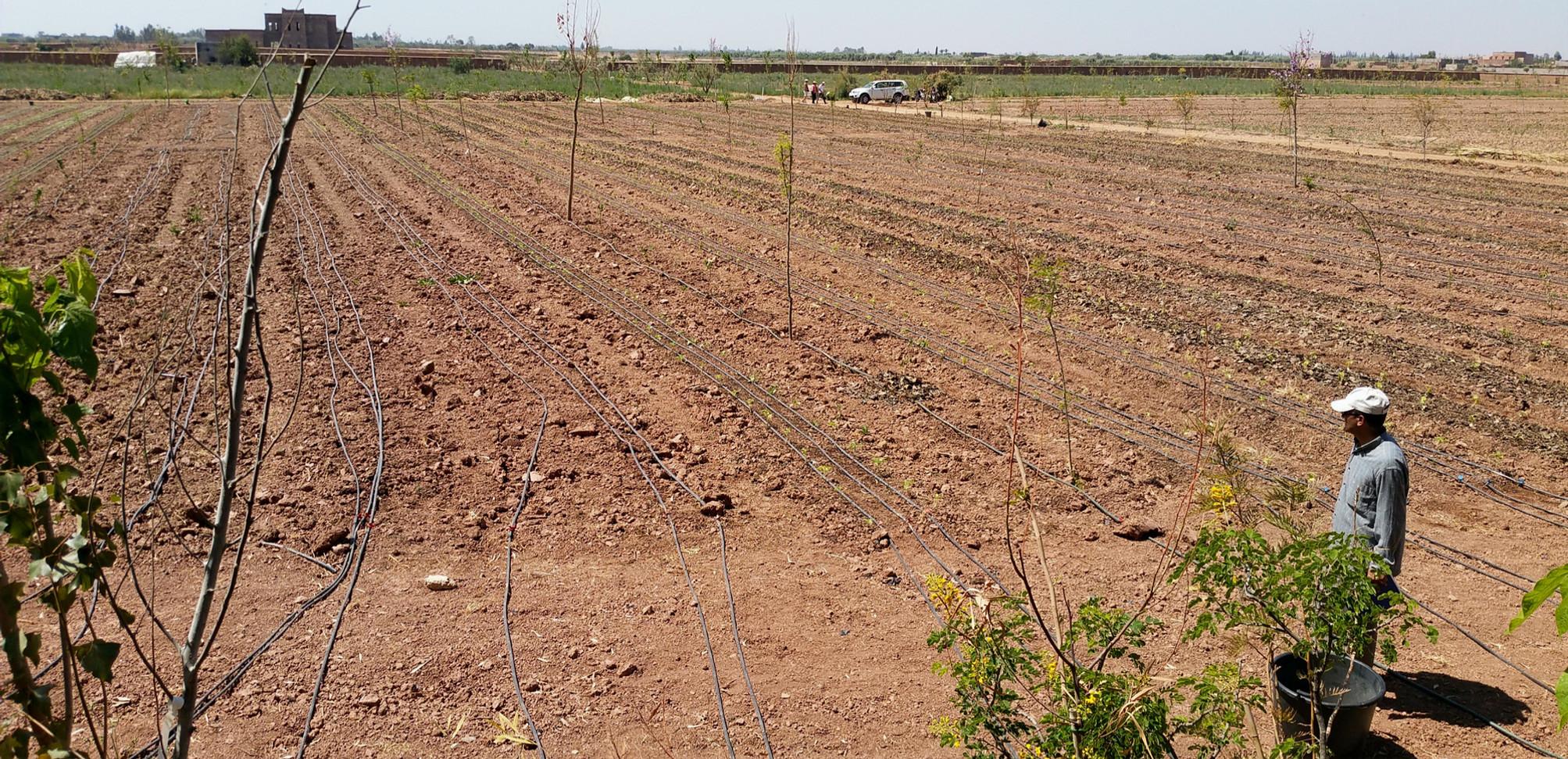 Installation de l'agroforesteire dans le maraichage....