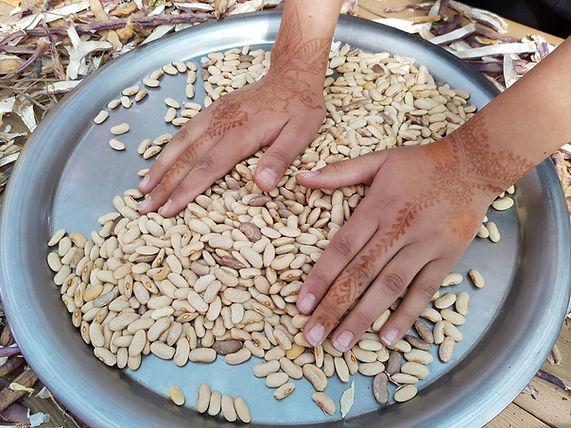 ecole permaculture, fabien tournan, regeneration vegetale