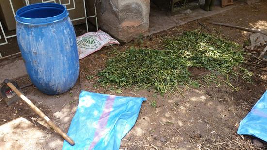 Préparation des extrait fermentés pour la fertilisation des arbres