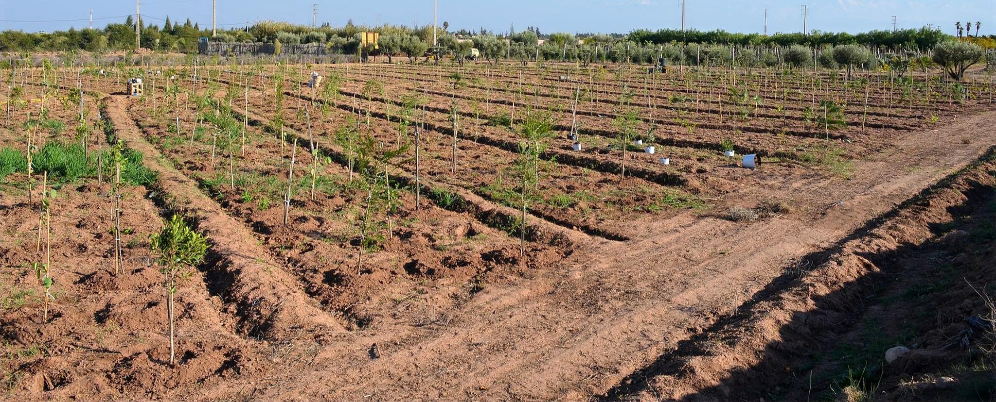 Plantation de 2500 arbres....
