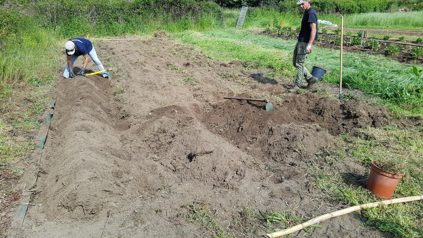Préparation de la zone...Désherbage, mise en billon, amendement, semi d'engrais verts..