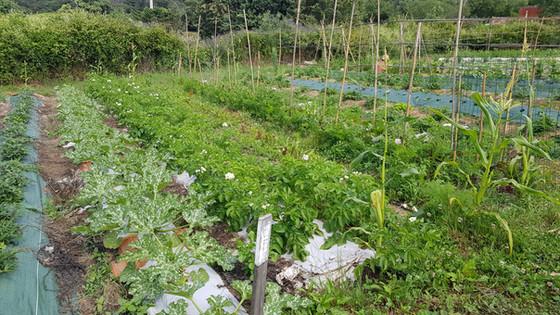Jardin en production....