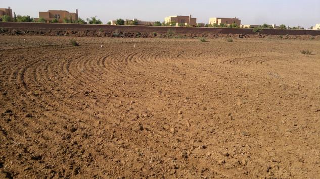 Travail légé du sol avec les disqies (cover crops) pour recouvrir les graines...