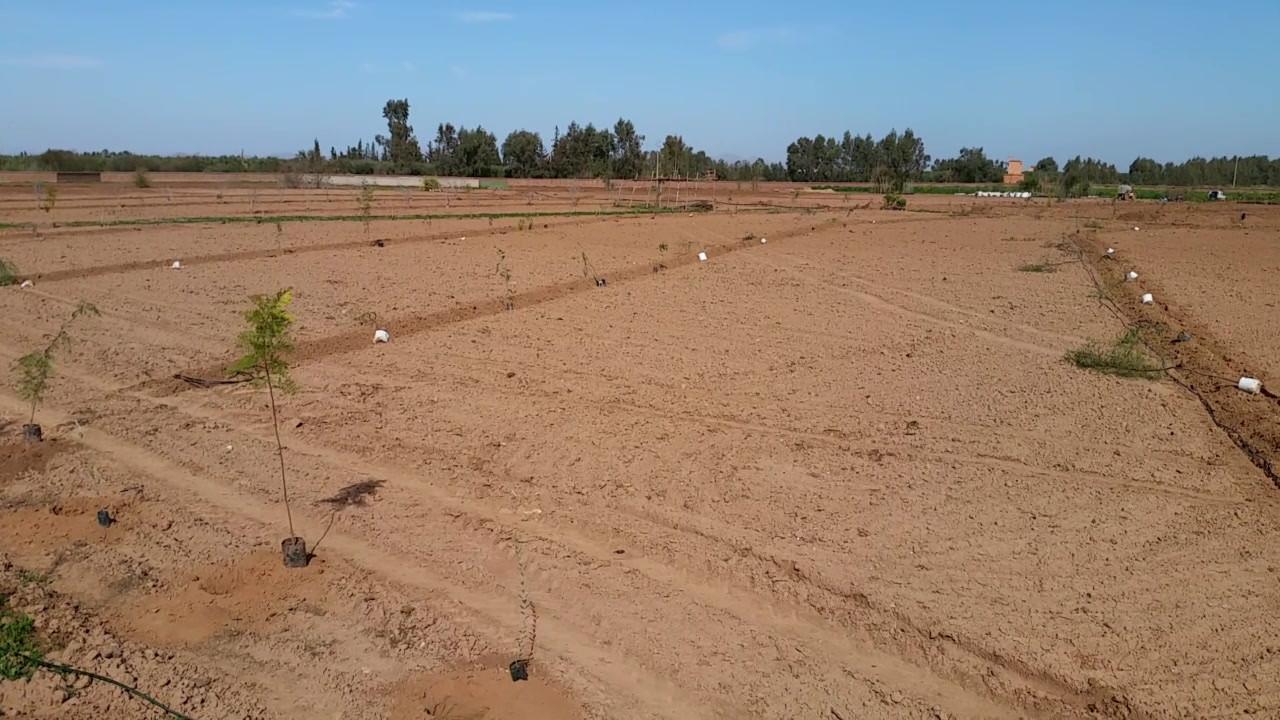 Petit tours de chantier, implantation agroforesterie et couloirs de patures