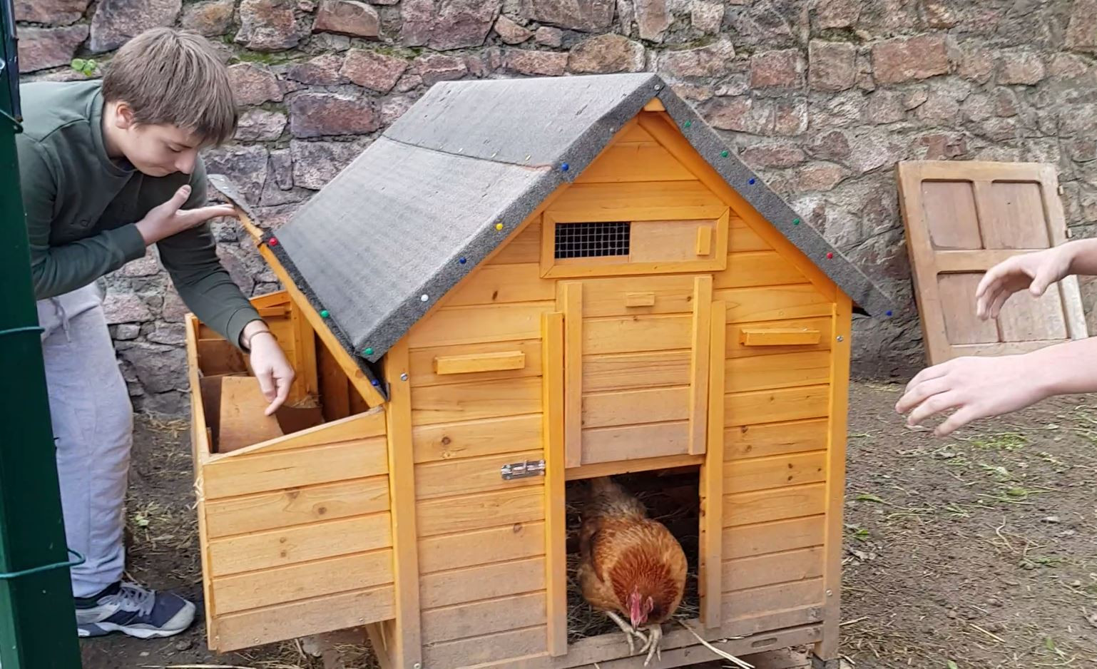 Poules recycleuses et productrices d'oeufs...