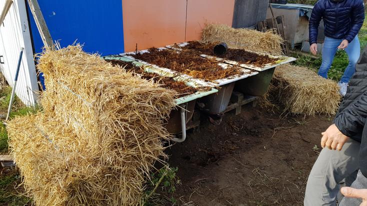 Mutualisation de baignoire pour lombriculture plus grande capacité...